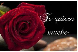 Te quiero mucho Tarjeta con rosa bonita