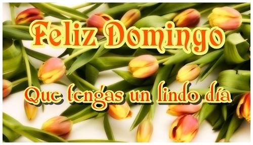 Imagen con tulipanes de Feliz Domingo para compartir