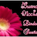 Imágenes de buenas noches con flores 10