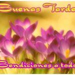 IMÁGENES DE BUENAS TARDES CON FLORES PARA WHATSAPP (5)